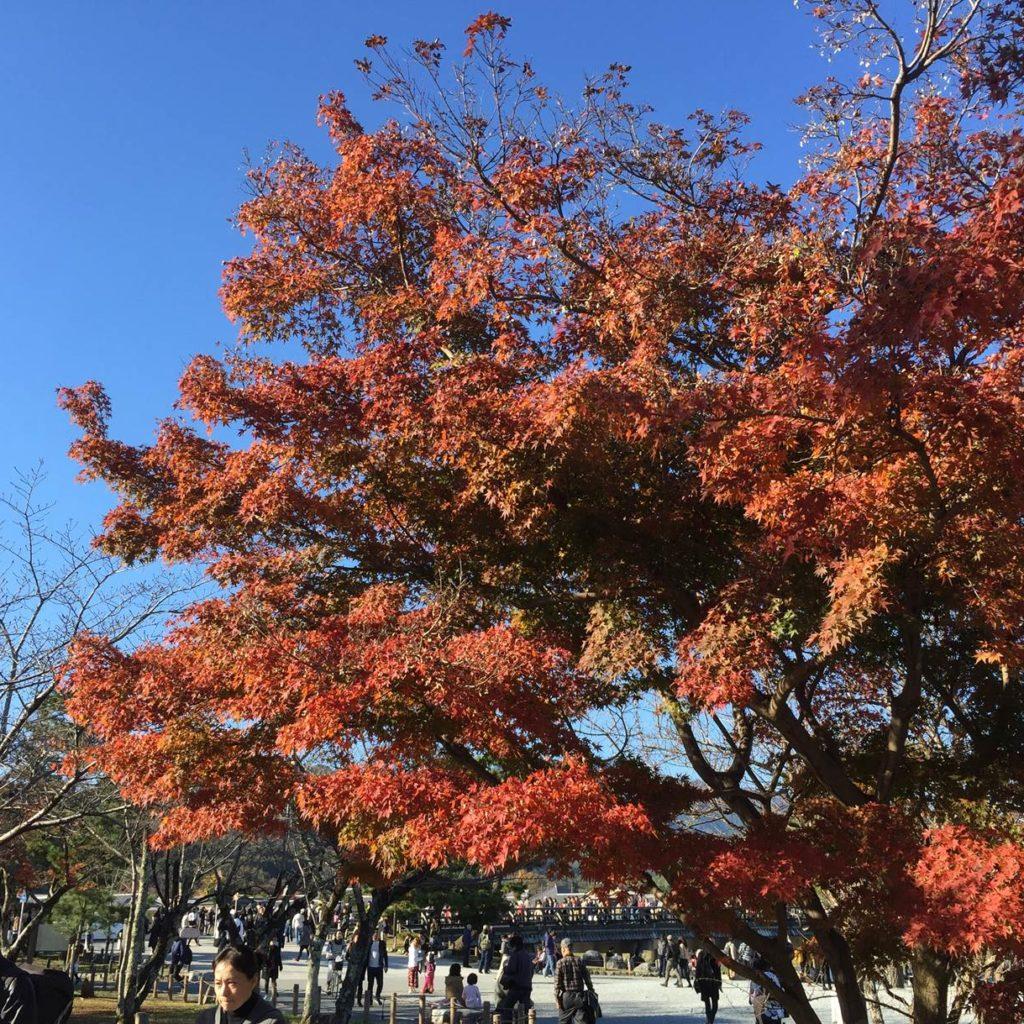 【観光スポット】京都・嵐山完全攻略!モデルコース付き!